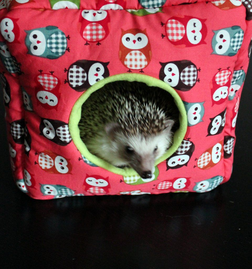 Coral Owl Cube House Small Pet Home Hidey For Hedgehogs Rats Small Animal Small Animal Bedding Small Pets Pet Home