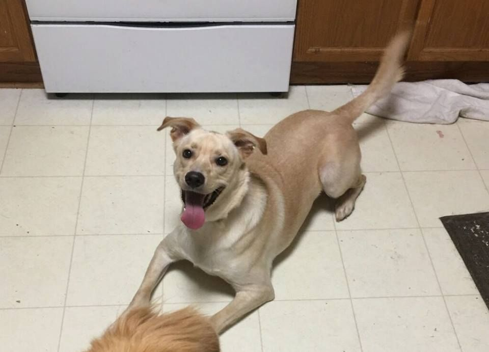 Puppy rescue concord nc