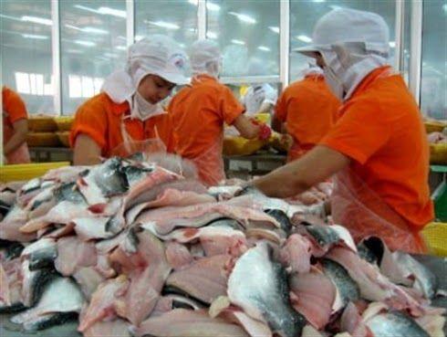 Hàm lượng ẩm không quá 83% trong cá tra xuất khẩu: Đề nghị áp dụng 'thí điểm' ở một số thị trường - TIN TỨC NÔNG NGHIỆP