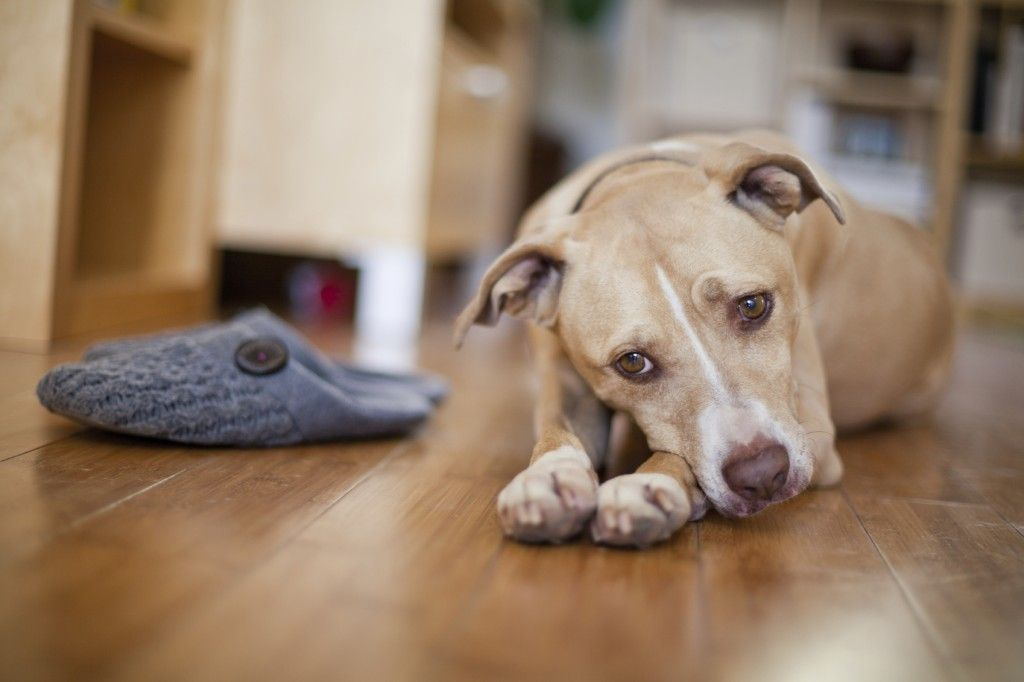 Breed restrictions 101 dog training near me dogs