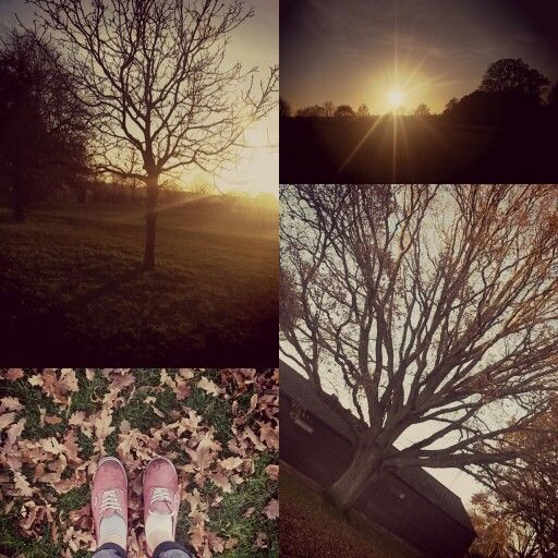 Collage of my walk in park