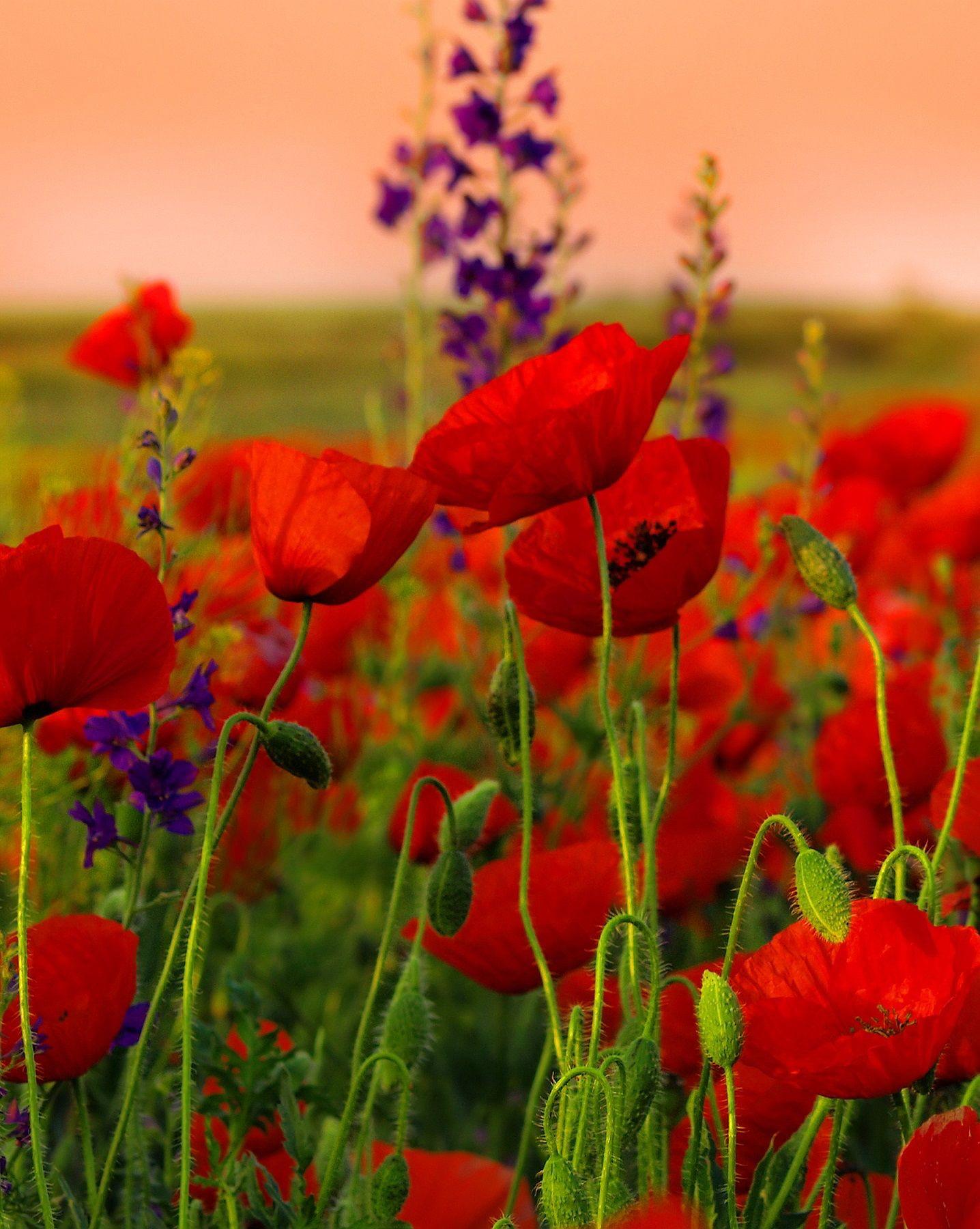 aa1e3499690011681e8bafcc6f5143d0 Luxe De Fleurs De Jardin Des Idées