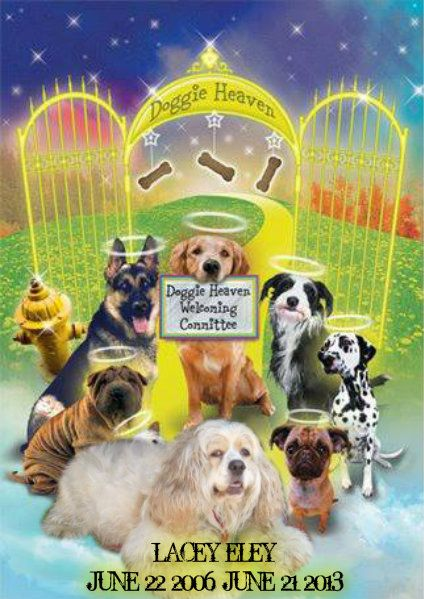 Lacey Eley Dog Sympathy Rainbow Bridge Pet Sympathy