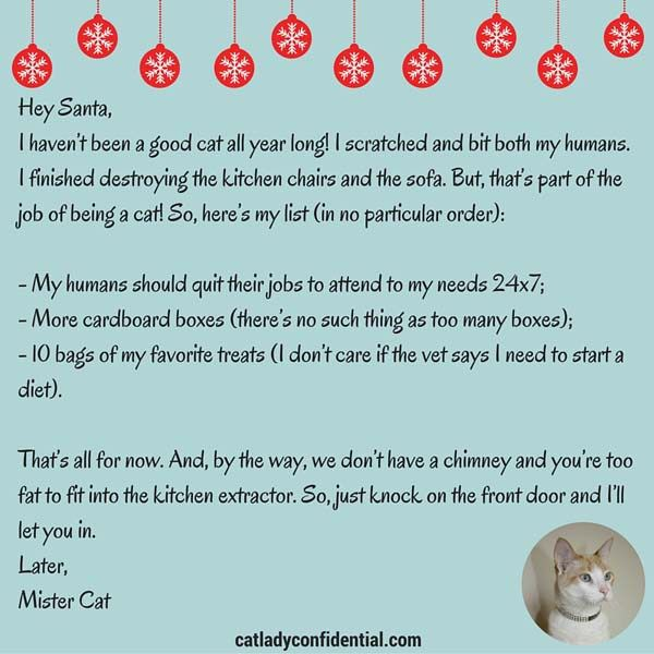 A CatS Letter To Santa  Santa Cat And Cat Lady