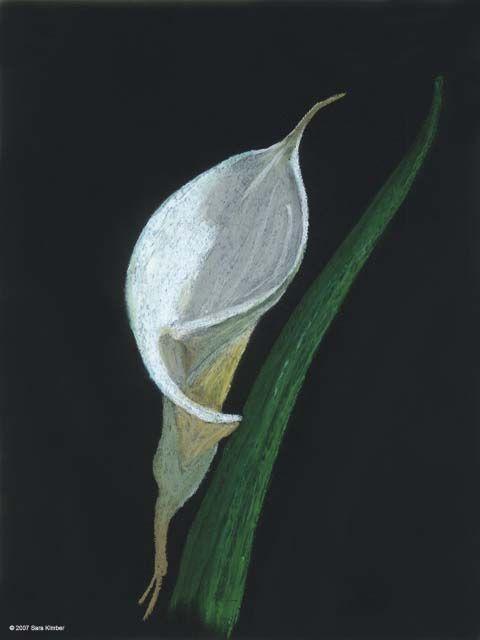 Oil Pastel On Black Paper Bear Feather Art Oil Pastel Art Oil