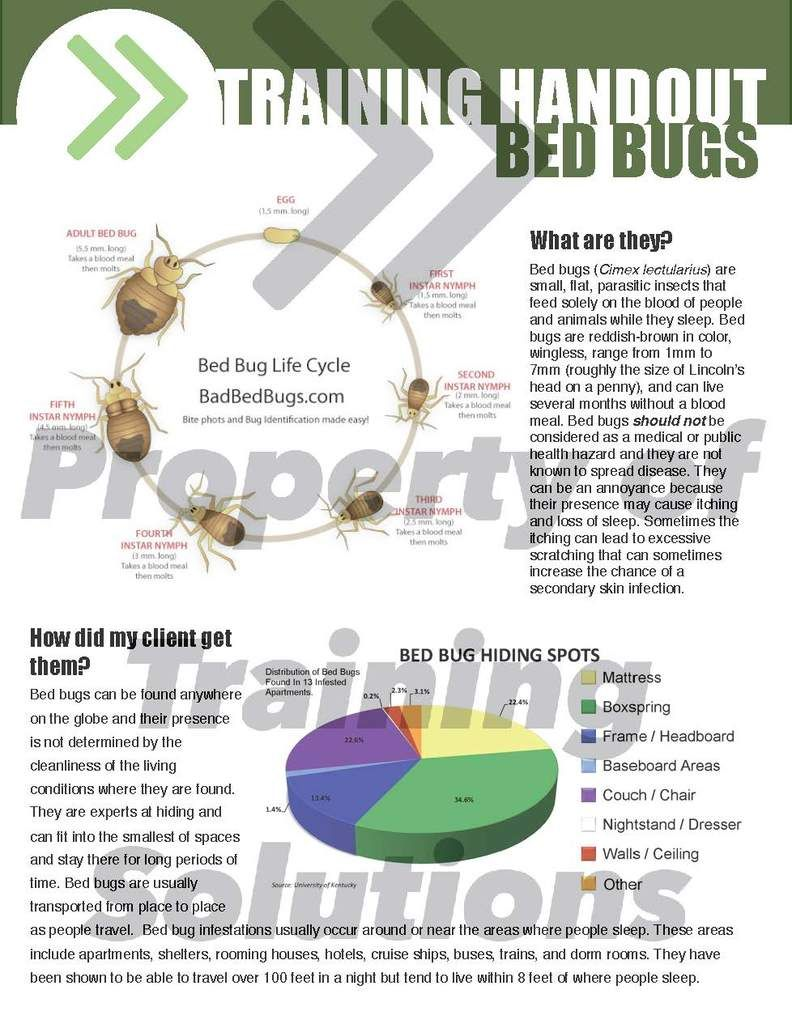 Bed Bugs Bed bugs, Bugs, Bed