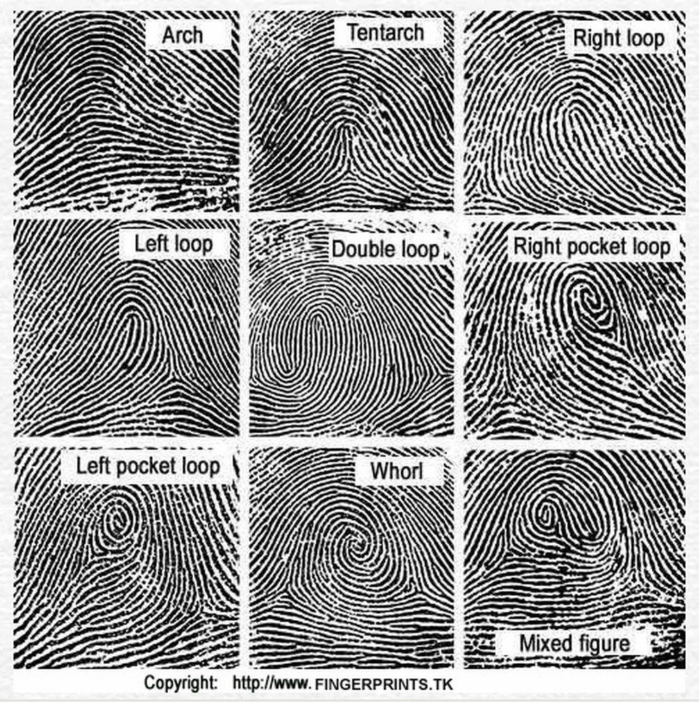 Fingerprint Types - Google True Crime And
