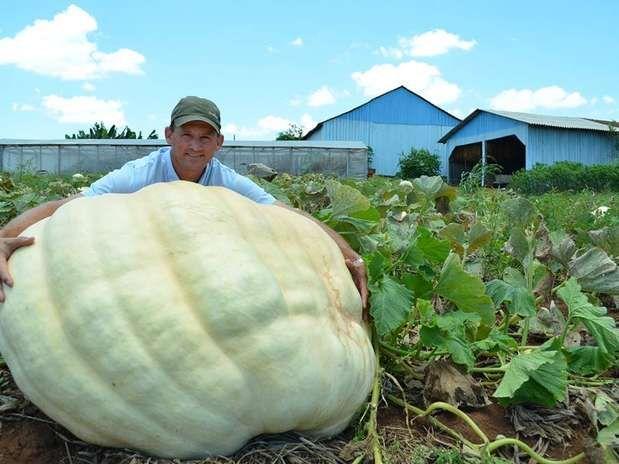 Agricultor Luiz Antonio Theisen cultivou abóbora de 286 quilos em Santa Catarina Foto: Débora Ceccon /Jornal O Líder / Divulgação