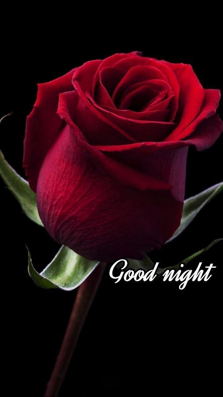daygood night pinterest night quotes daygood night pinterest night quotes night messages and qoutes izmirmasajfo