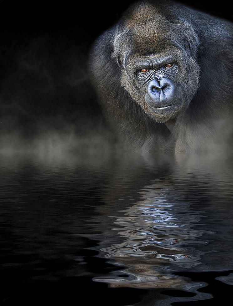 The Stare by Paul Keates    on 500px