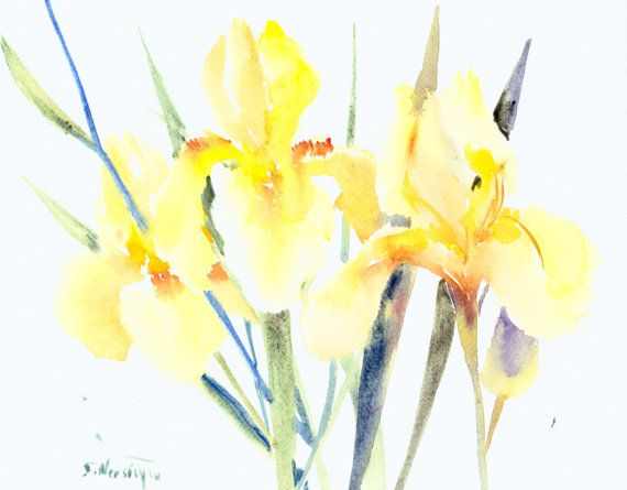 Three Yellow Irises, 14 X 11 in, original watercolor painting, soft ...