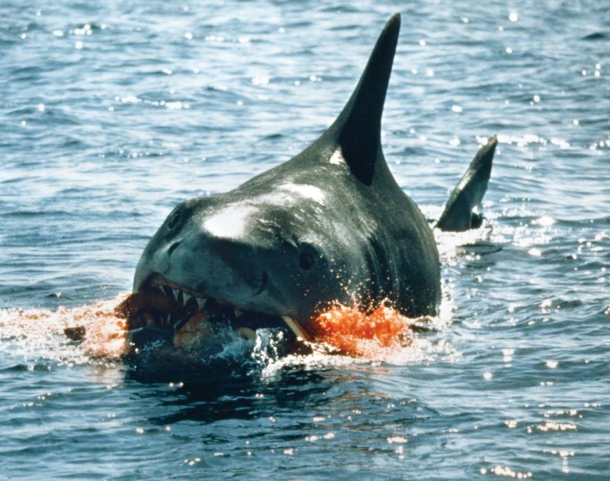 Jaws Movie | Movie Memorabilia Emporium: Jaws (1975) Promotional photos - High ...