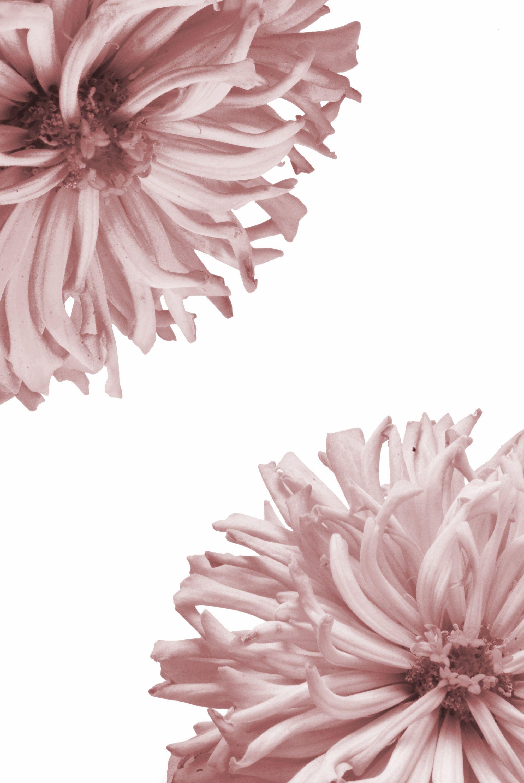 Laminas flores laminas escandinavas laminas - Laminas para pared ...