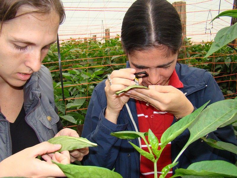CUARTA JORNADAS DE BUENAS PRÁCTICAS AGRÍCOLAS DEL MERCOSUR: Corrientes exhibe su exitosa experiencia sobre producción de pimiento por biocontrol en encuentro internacional #ArribaCorrientes
