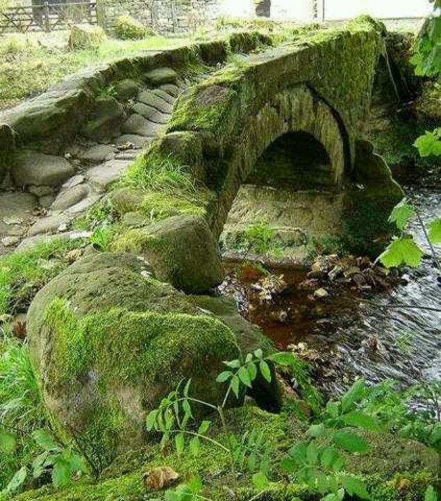 Old bridge in Scotland, From Old. MOSS woman's secret garden