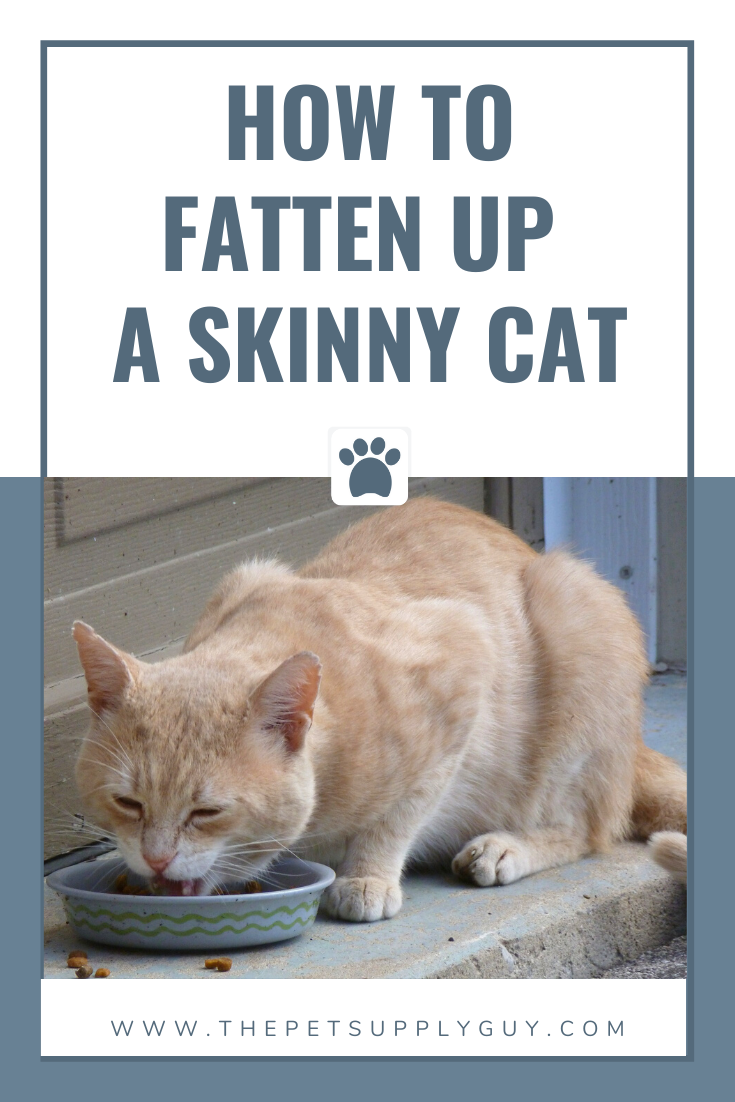 How to Fatten Up a Skinny Cat in 2020 Cats, Cat
