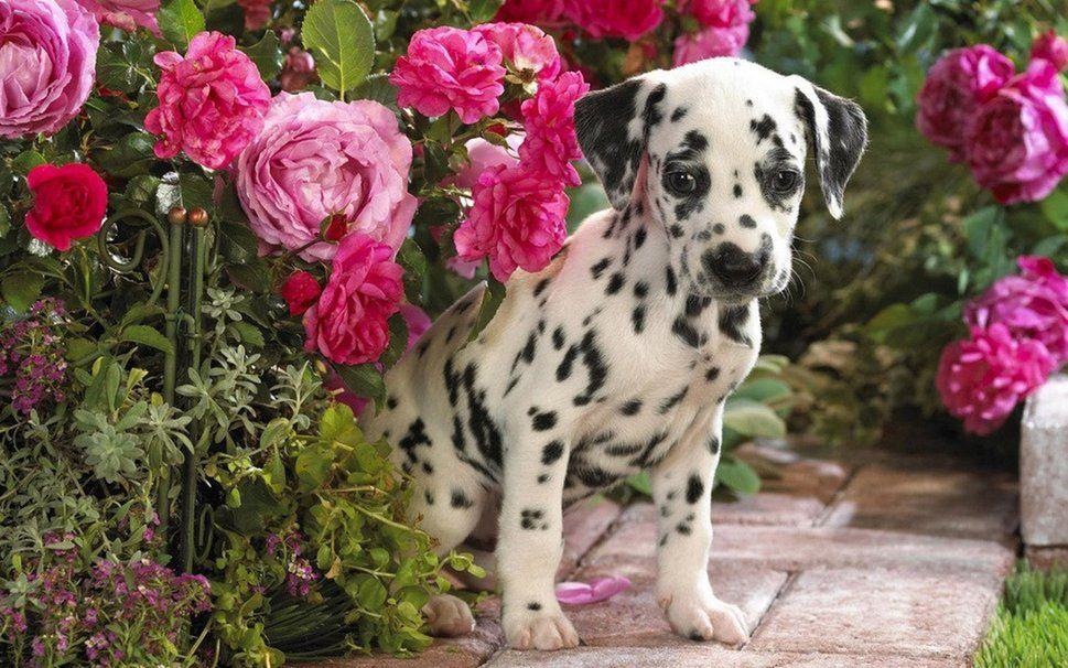 o cão Vetor
