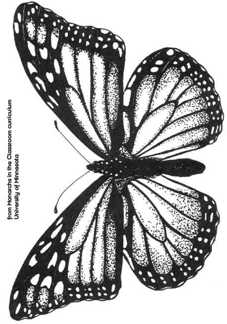 Pin By Ashley Oross On Things I Love Butterfly Drawing