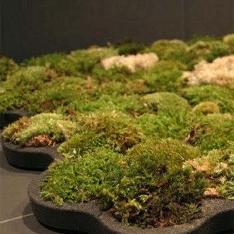 Super Badmat van mos (om zelf te maken) (met afbeeldingen) | Tuinieren UY-67