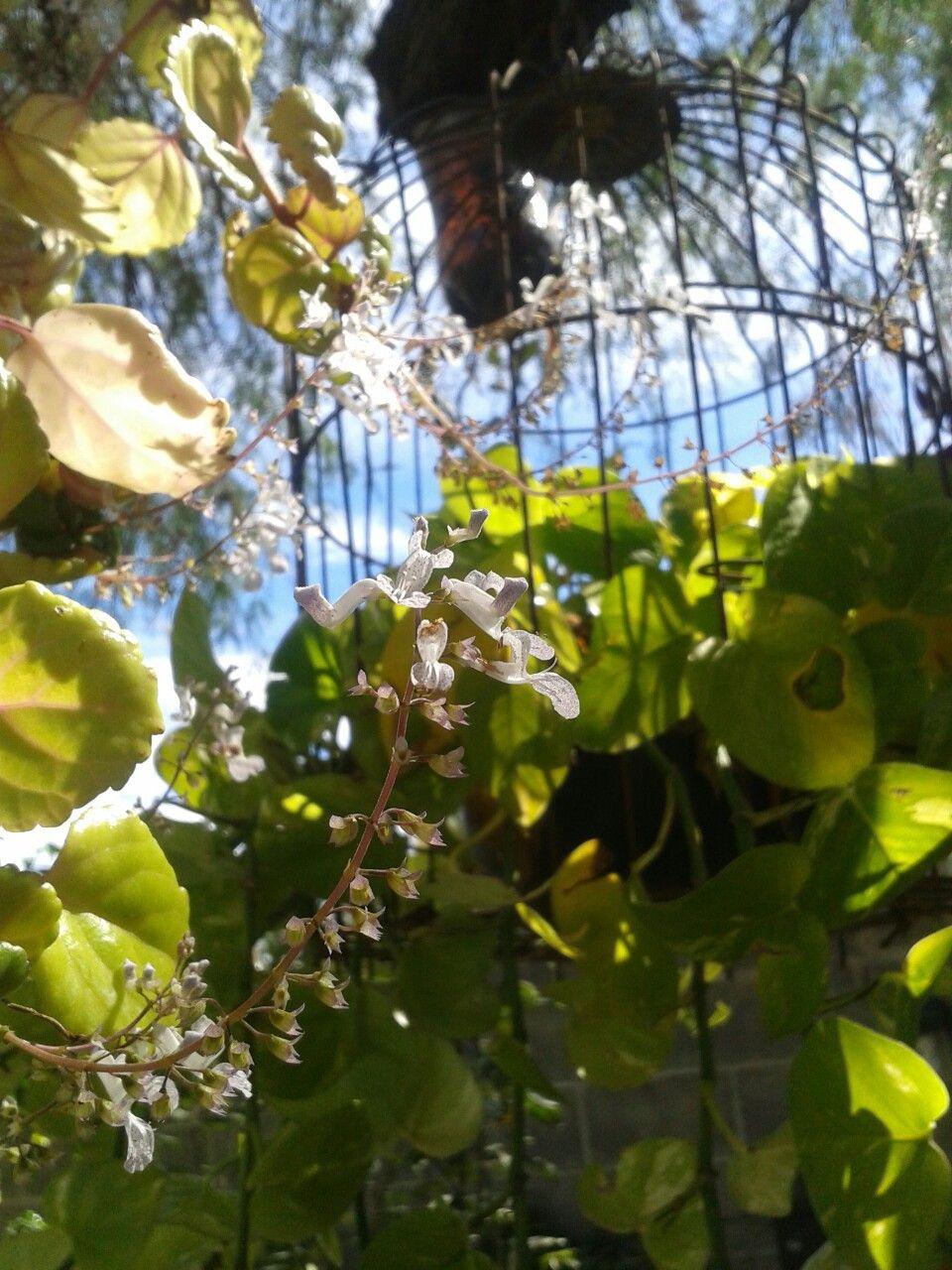 decoration ideas for gardens. ideas decorativas para jardines y exteriores.  #cage #decoration #garden #romantic