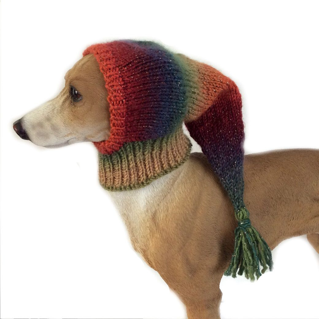 Extra Small Dog Snood Orange Italian Greyhound Snood Whippet Small Dog Hat Lurcher Snood Puppy Clothing Dog Clothes Dog A Dog Snood Dog Hat Crochet Dog