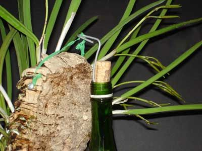 How To Mount An Orchid And Use A Wine Bottle To Hang It