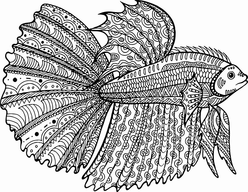 24 Betta Fish Coloring Page With Images Fish Coloring Page