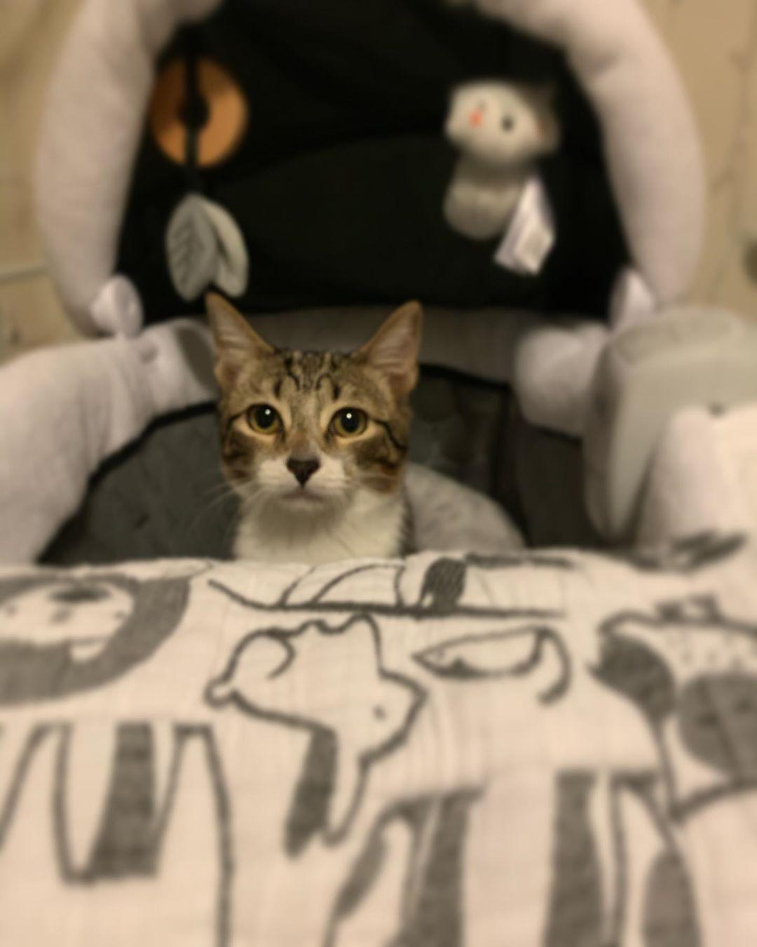 Cats Cat Catsofinstagram Of Instagram Catstagram Catlover Pets Instacat Catlovers Meow Kittens Kitten Cat Day Funny Cat Videos Cats