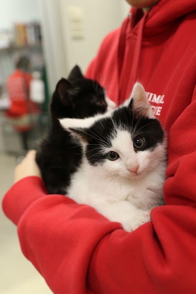 These Kitten Bjorns Are Helping Feral Cats Find Their Forever Home
