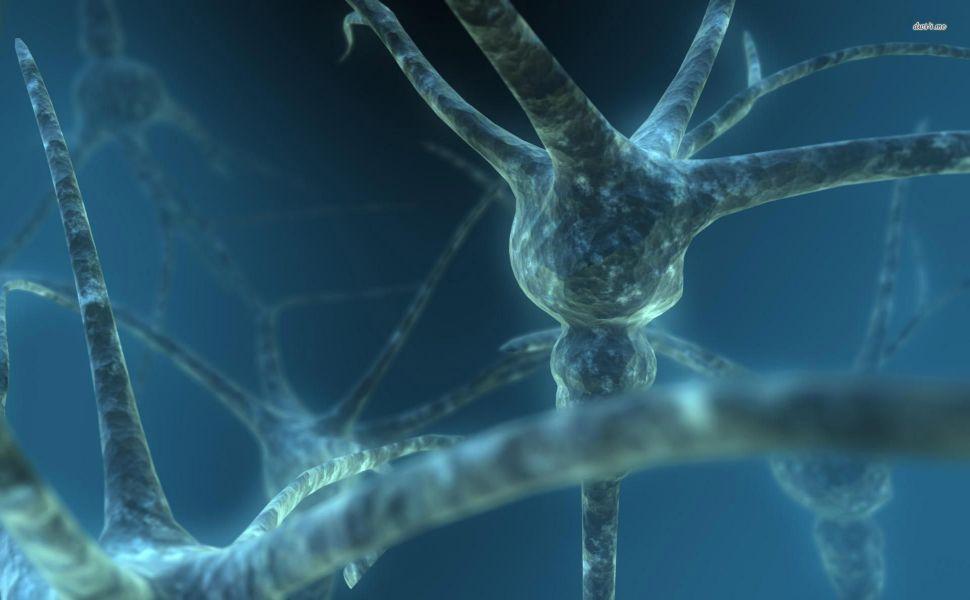 Neurons Hd Wallpaper Neurons Wallpaper Hd Wallpaper Ultra hd biology wallpaper hd