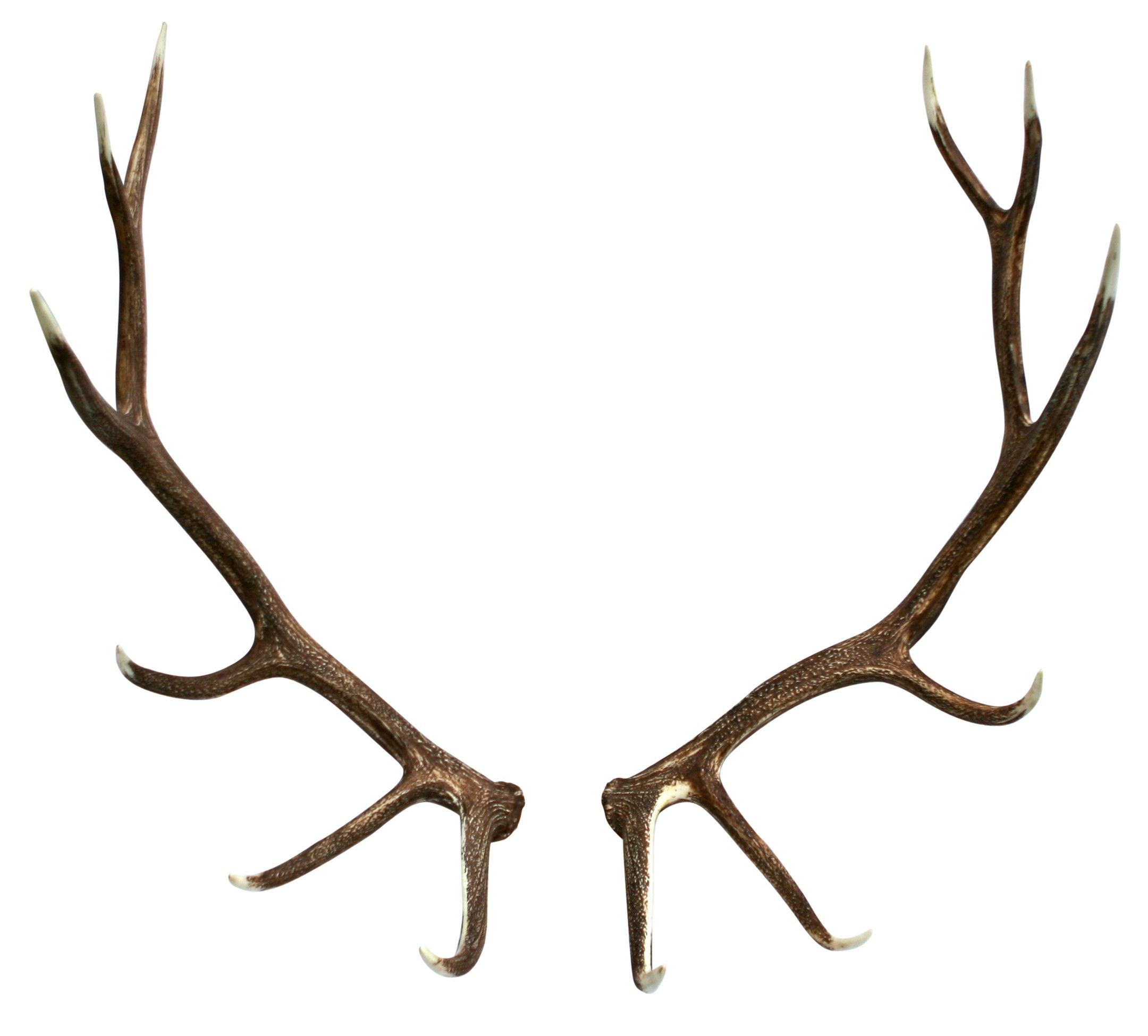 When to look for shaved antlers
