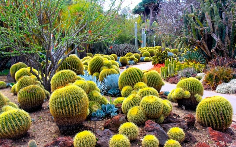 Perfect Cacti · The Desert Botanical Gardens In Phoenix ...