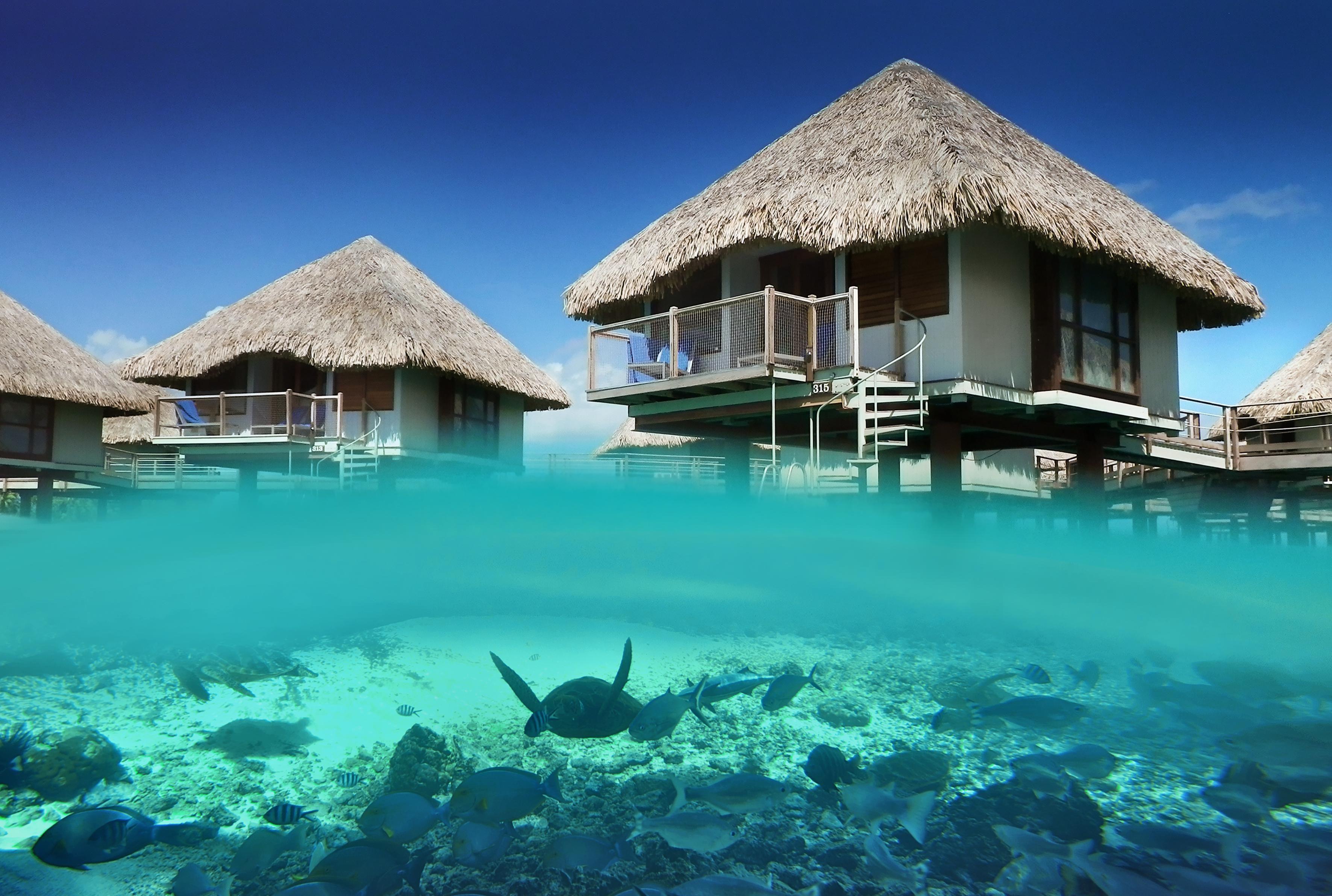 Bungalow Bora Ocean French Polynesia Blue Lagoon