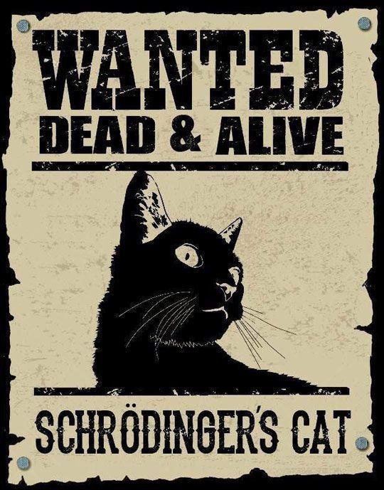 schrödinger katze