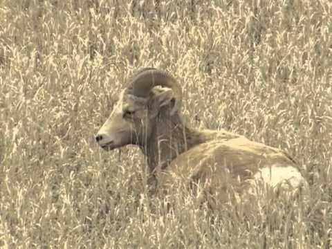 Badlands In Brief: Wildlife Episode