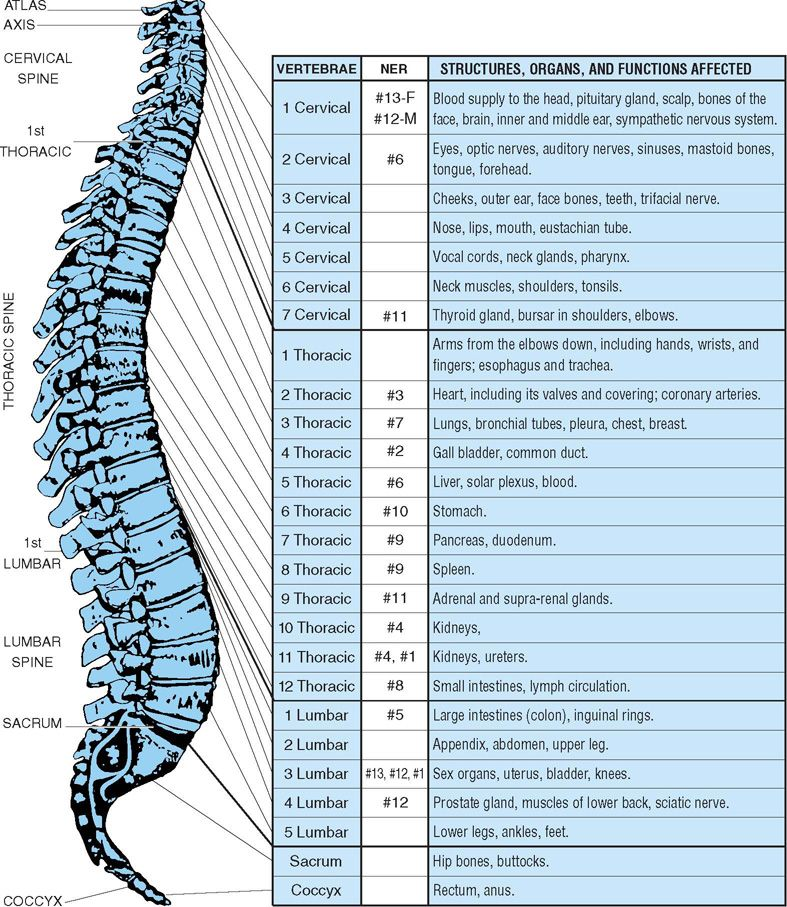 Spine_img_0.jpg (787×907) Chiropractic care
