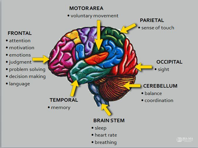 The Basic Facts your Doctor Didn't Tell you about Brain ...