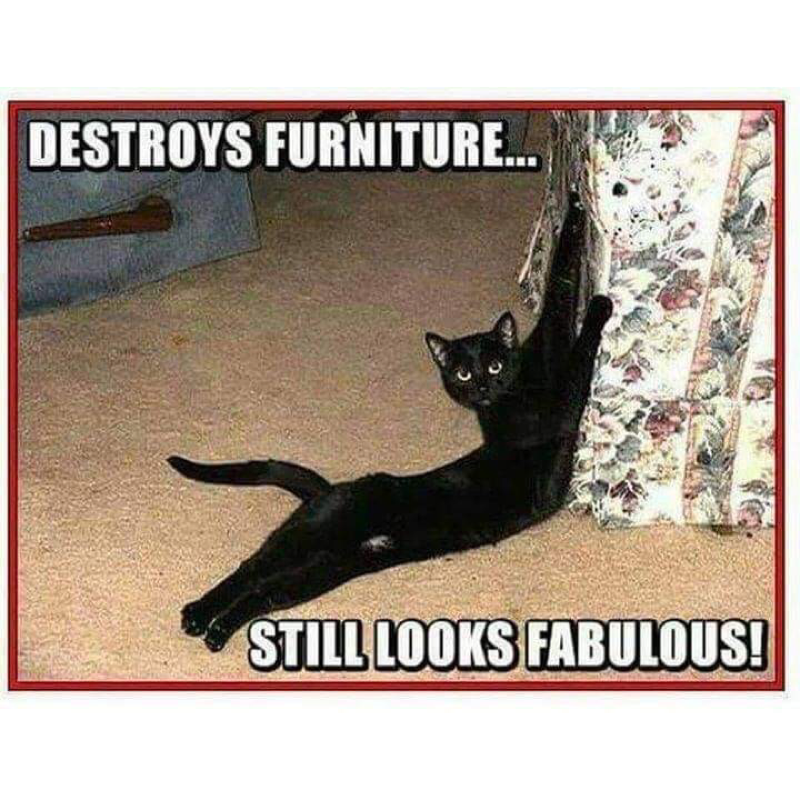 Clean Memes 11 04 2019 Afternoon Cats Bad Cats Cat Memes
