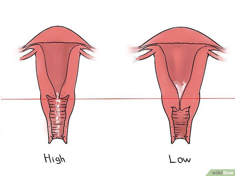 Mumu Frühschwangerschaft