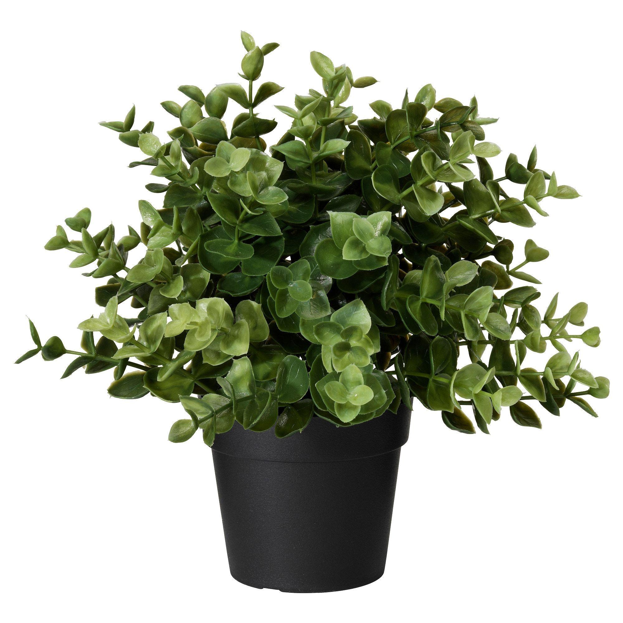 Fejka Plante Artificielle En Pot Origan Ikea Artificial Potted Plants Small Artificial Plants Artificial Plant Wall