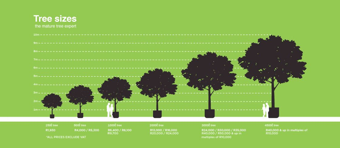 Football sizes semi mature trees