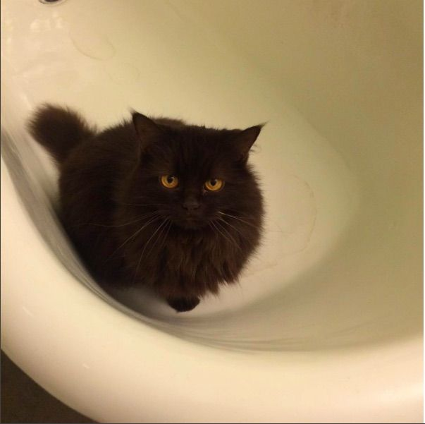 Lost Cat Female London On Canada N6c 1b1 Lost Cat Cats Losing A Pet