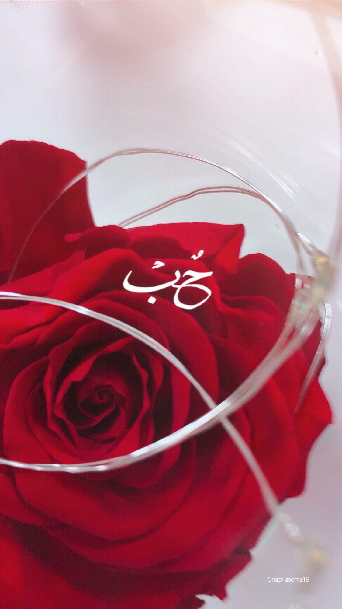 يوميات image by Semsem🦋 Iphone background, Flowers, Rose
