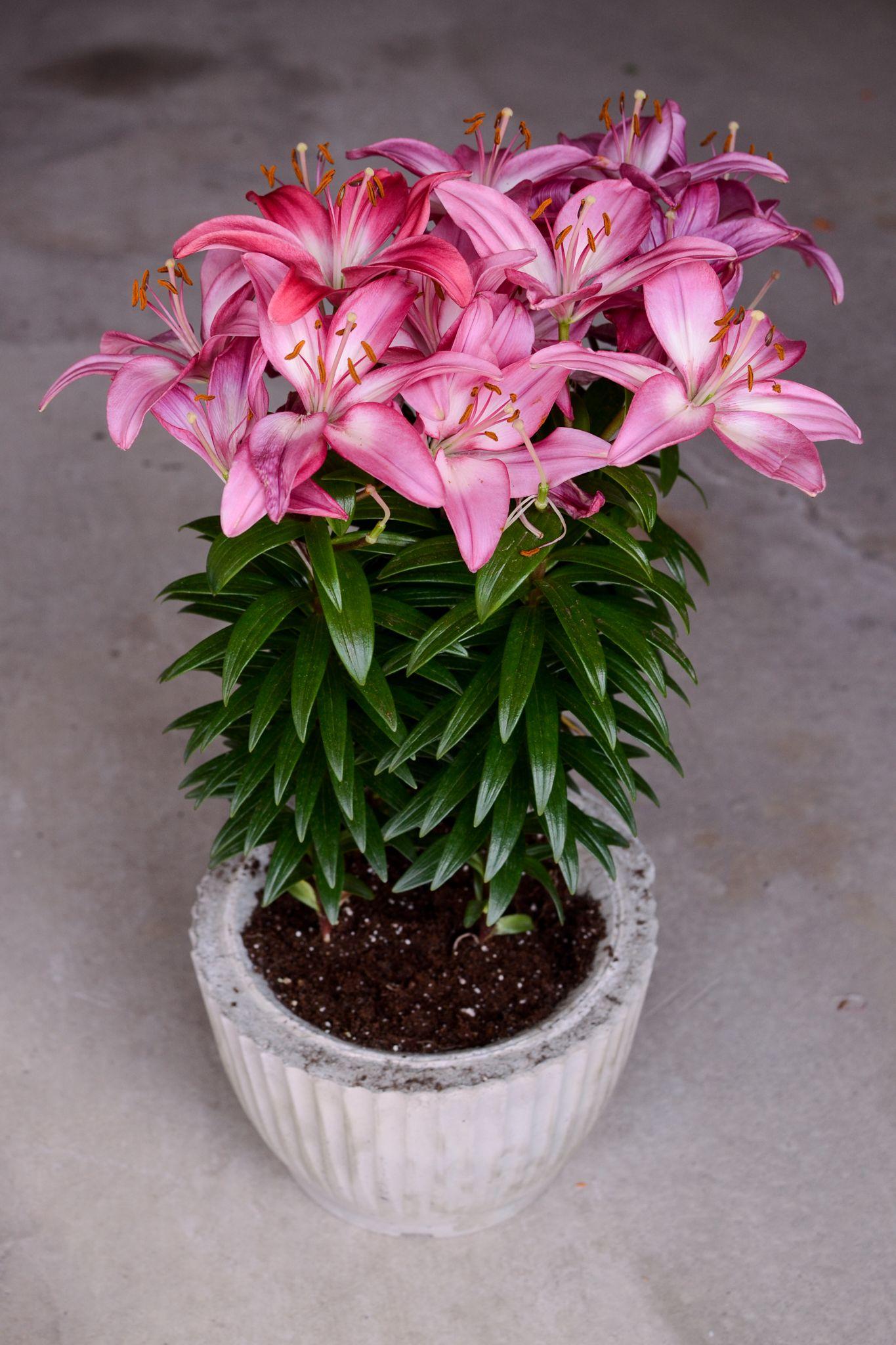 Castconcrete flower pot everyday brandy flower pots
