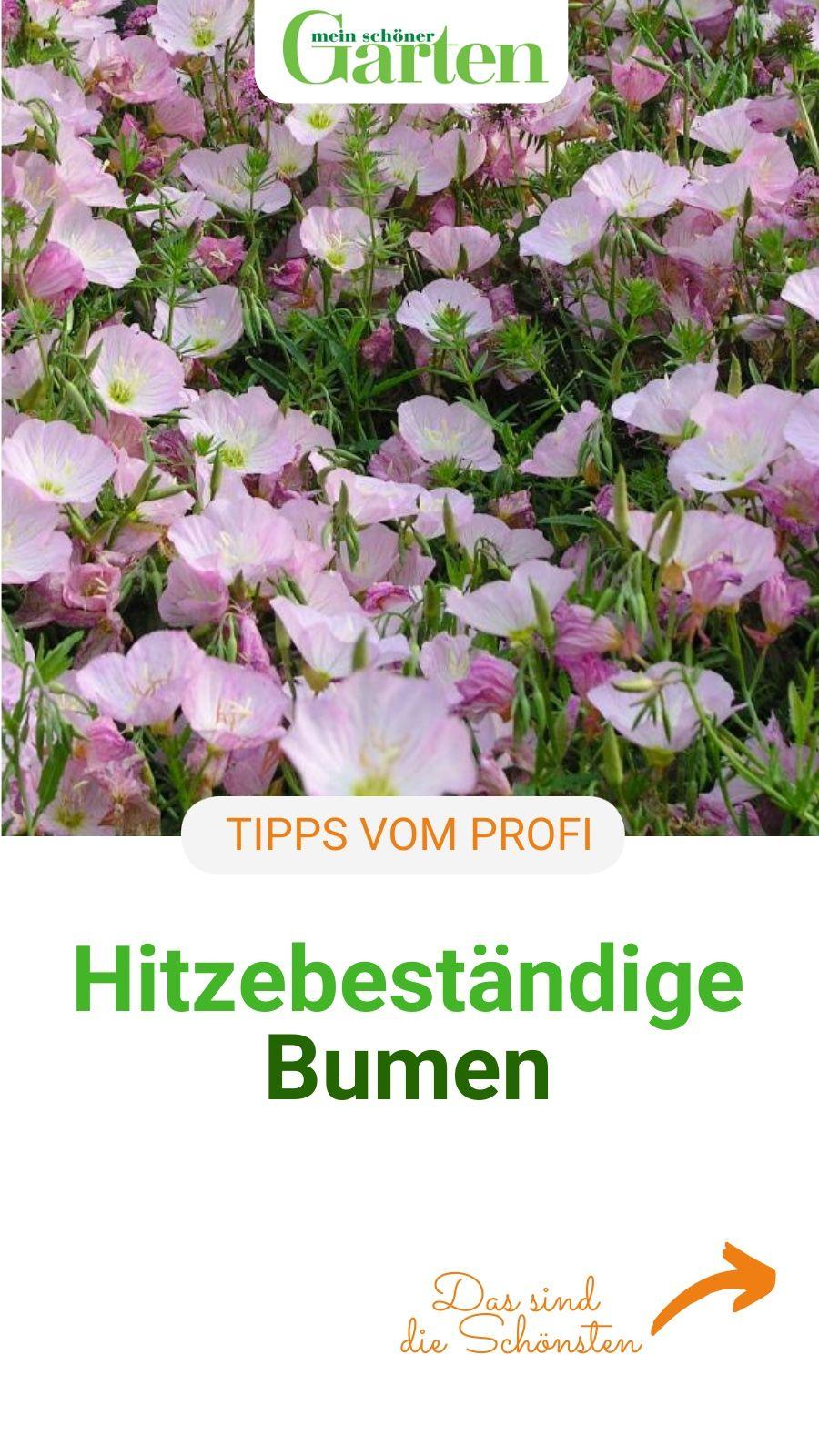 Photo of Hitzebeständige Blumen für Blumenbeet