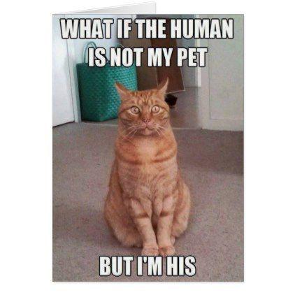 Human is not my pet card | Zazzle.com