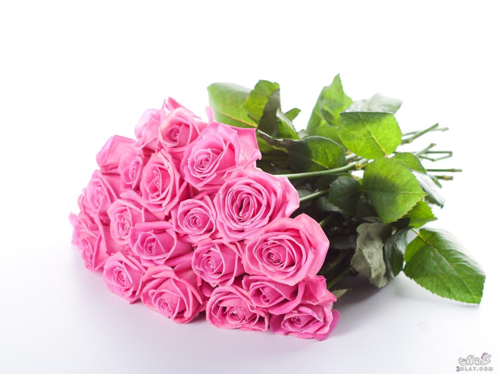 اروع خلفيات ورود 2019 صور ورود رومانسية تحفة 2019 صور زهور مميزة 2019 Rose Flower Wallpaper Hd Flower Wallpaper Pink Rose Flower