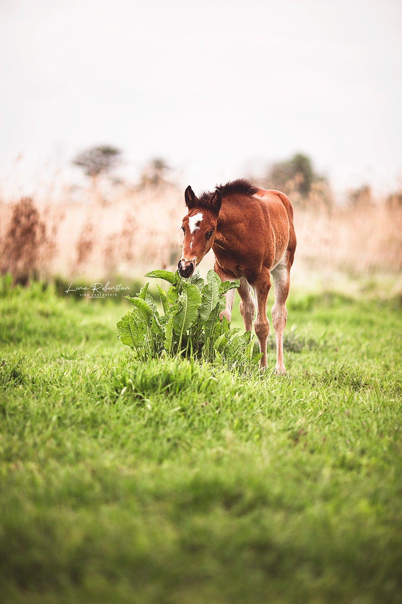 Junges Fohlen Knabbert An Gestrupp Pferde Fotografie Fohlen Pferdefotografie