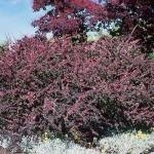 We Show You How And When To Trim Bushes In Your Garden And Give A Few Shrubbery Recommendations To Help Yo How To Trim Bushes Landscaping Tips Landscape Plans