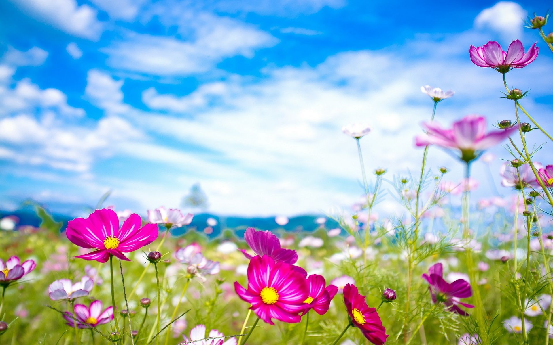 Flower Wallpapers Background Natures Wallpapers Flower Wallpaper